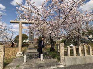 和泉店の前にある忠魂碑と桜