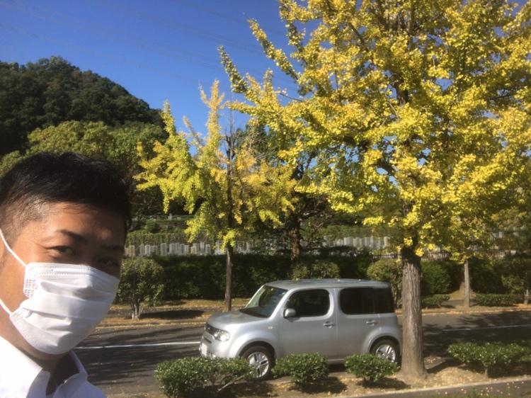 飯盛霊園の銀杏の木