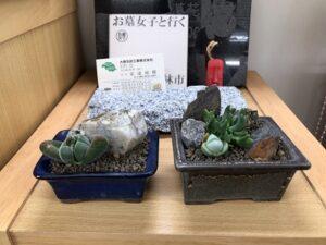 南大阪店にて、多肉植物を販売