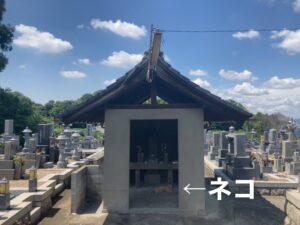 富田林市の佐備墓地で休憩しているネコ
